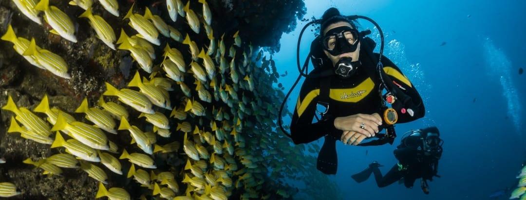 Phuket Diving Season | When Should You Go?